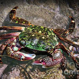 Mariola Bitner - Rainbow Crab