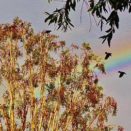 Savanna Paine - Rainbow Crows