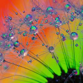 Steffen Gierok - Rainbow Dandelion