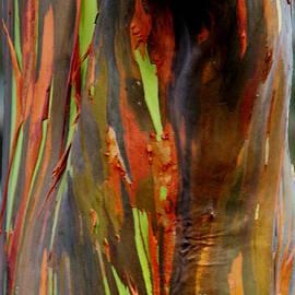Eva Kato - Rainbow Eucalyptus