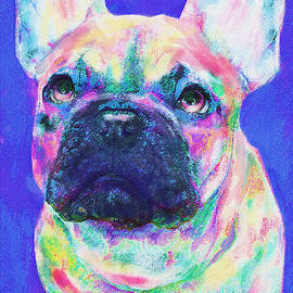 Jane Schnetlage - Rainbow French Bulldog