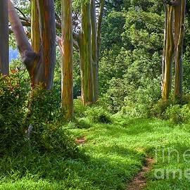 Ken Andersen - Rainbow Grove