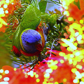 Rainbow Lorikeet IV