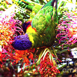 Rainbow Lorikeet V