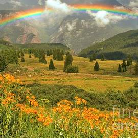 Adam Jewell - Rainbow Over Wildflowers In The San Juan Mtns.