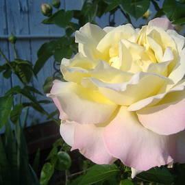 Joi Lee - Rainbow Rose