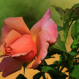 Donna Kennedy - Rainbow Sherbert