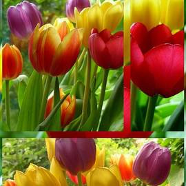 Joan-Violet Stretch - Rainbow Tulip Collage