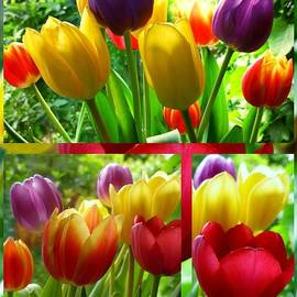 Joan-Violet Stretch - Rainbow Tulips Collage 2