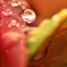 Bellesouth Studio - Raindrop Face