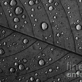 Andrea Gingerich - Raindrops on a Leaf