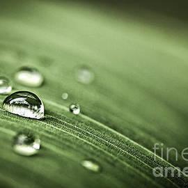 Elena Elisseeva - Raindrops on leaf