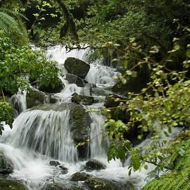 Sandra Sengstock-Miller - Rainforest Beauty.  New Zealand