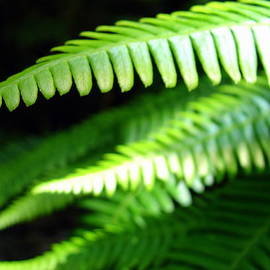 Ramona Johnston - Rainforest Fern