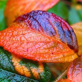 Rona Black - Rainy Day Leaves