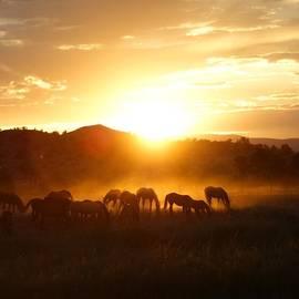 Kasie Morgan - Ranch Sunset