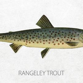 Rangeley Trout