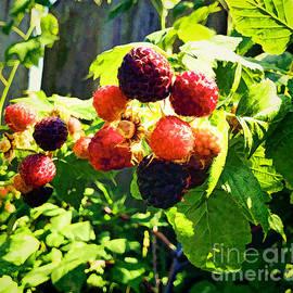 Luther   Fine Art - Raspberries A La Fence