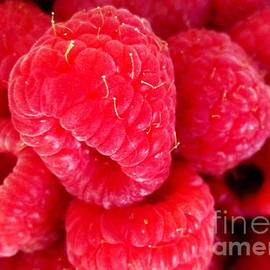 Margaret Newcomb - Raspberry Delight