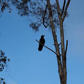 Ron McMath - Raven Silhouette 2