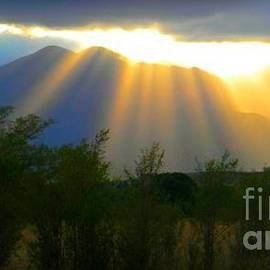 Michelle Frizzell-Thompson - Rays from Heaven