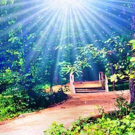 Judy Palkimas - Rays Of Light To Guide The Path