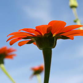 Neal  Eslinger - Reach for the Sky