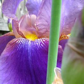 Brooks Garten Hauschild - Ready for Spring