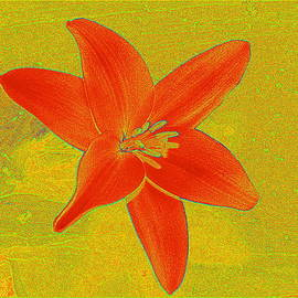 Kathy Barney - Red Abstract Lily