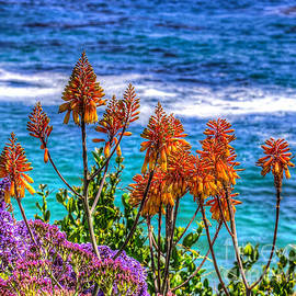 Jim Carrell - Red Aloe by the Pacific