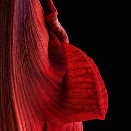 Ann Garrett - Red Amaryllis