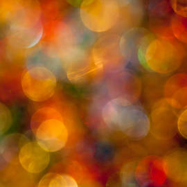 Jan Bickerton - Red and Gold Bokeh