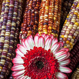 Garry Gay - Red and white mum with Indian corn