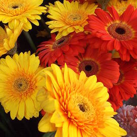 Miriam Danar - Red and Yellow Flowers - Gerbera Daisies