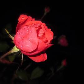 MTBobbins Photography - Red at Night