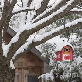 Elena Elisseeva - Red barn birdhouse on tree in winter