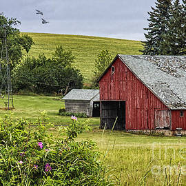 Priscilla Burgers - Red Barn in the Palouse