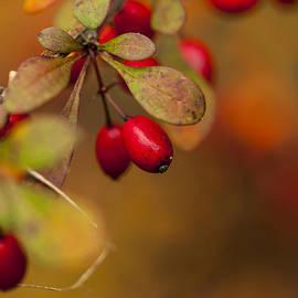 Karol  Livote - Red Berry