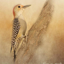 Pam  Holdsworth - Red-Bellied Woodpecker