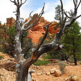 Debra Thompson - Red Canyon Tree And Rocks