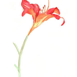 J Travis Duncan - Red Day Lily