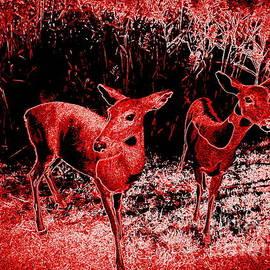 Ed Weidman - Red Deer