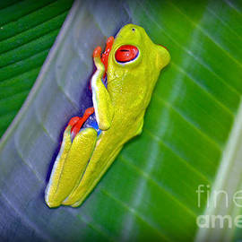 Gary Keesler - Red-Eyed Tree Frog