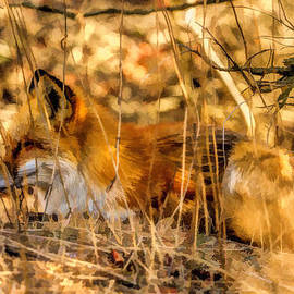 Geraldine Scull   - Red Fox 2