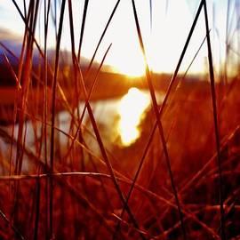 Sarah Pemberton - Red Grass