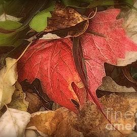 Miriam Danar - Red Leaf - First Glimpse of Autumn