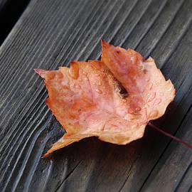 Renee Forth-Fukumoto - Red Leaf On the Dock
