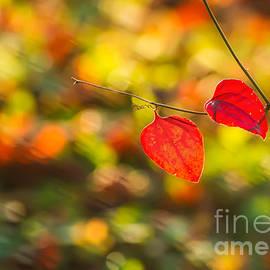 Leyla Ismet - Red Leaves
