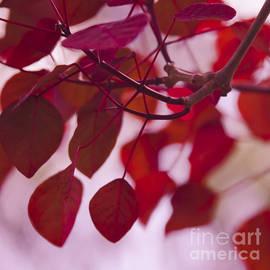 Sharon Mau - Red Leaves