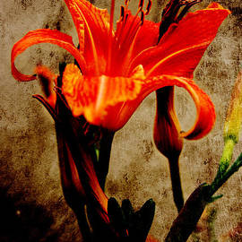 Lali Kacharava - Red Lily